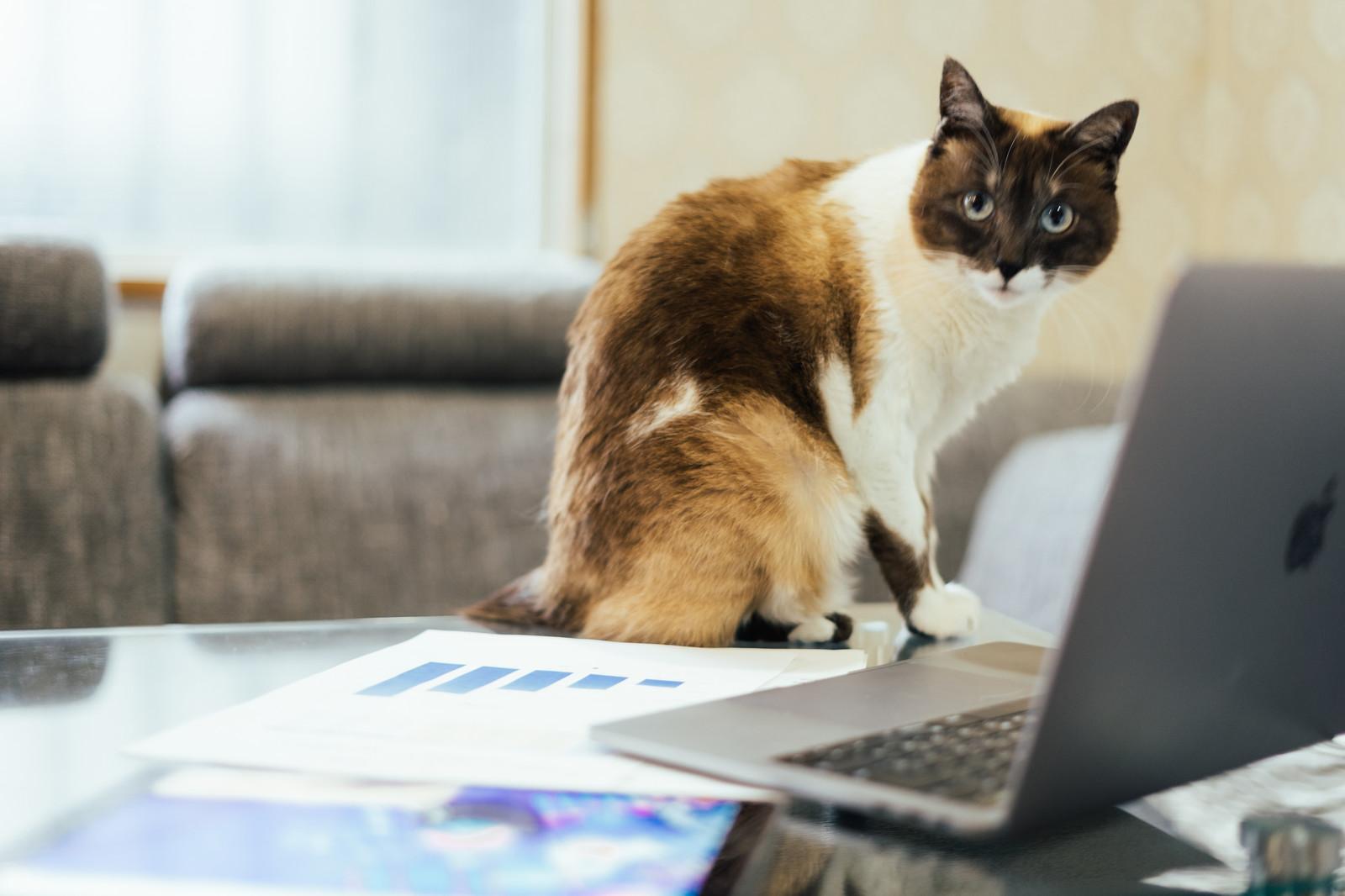 会社設立登記に必要な書類と流れを解説しますの画像1